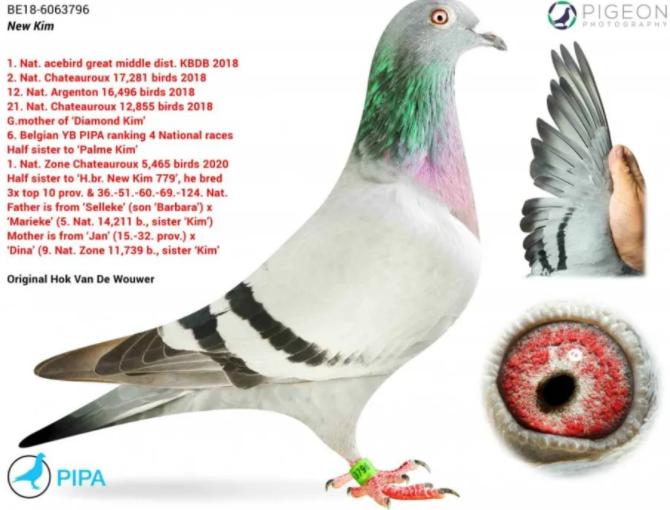 中国最贵十个鸽子(2021最贵的鸽子介绍)-第1张图片
